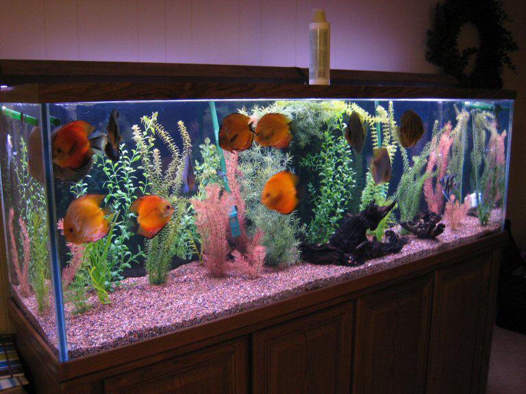 Декорация в аквариум видео