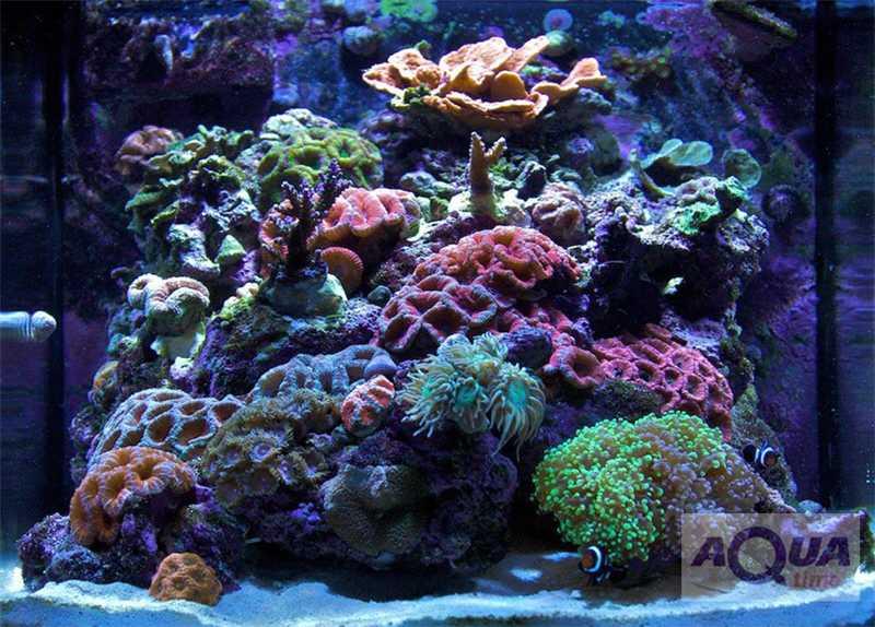 в морском аквариуме все красное имейте виду