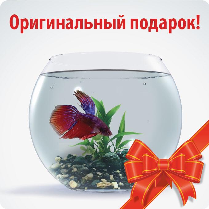 Подарок рыбка к чему это 808