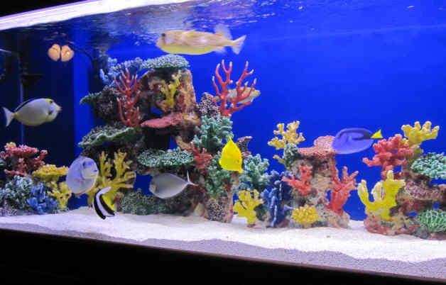 Морской аквариум как сделать